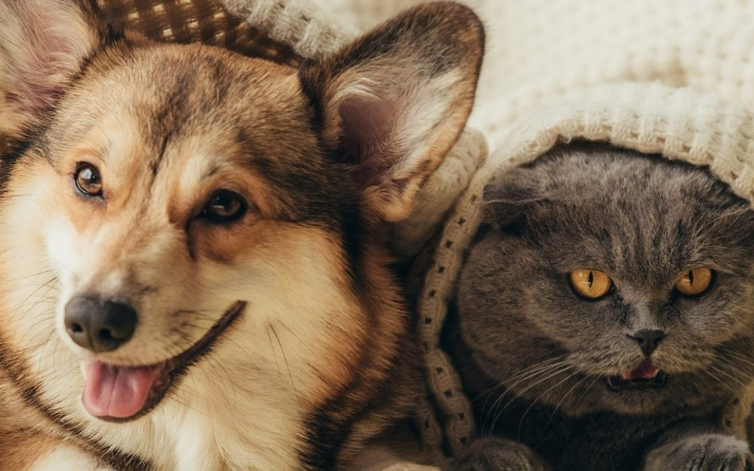 Moving to The UAE With Your Pet
